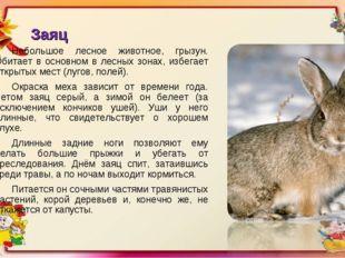 Заяц Небольшое лесное животное, грызун. Обитает в основном в лесных зонах, из