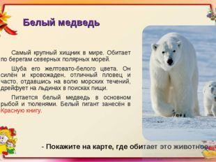 Белый медведь Самый крупный хищник в мире. Обитает по берегам северных полярн
