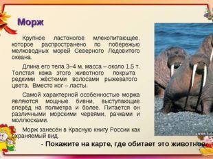 Морж Крупное ластоногое млекопитающее, которое распространено по побережью ме