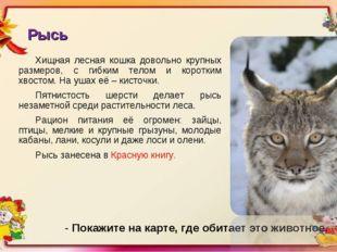 Рысь Хищная лесная кошка довольно крупных размеров, с гибким телом и коротким
