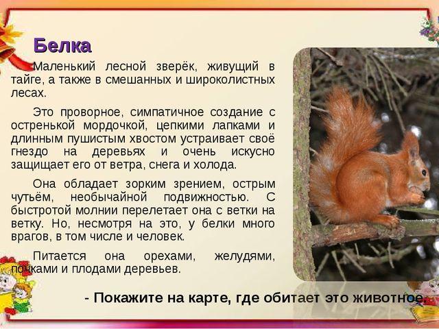 Белка Маленький лесной зверёк, живущий в тайге, а также в смешанных и широкол...