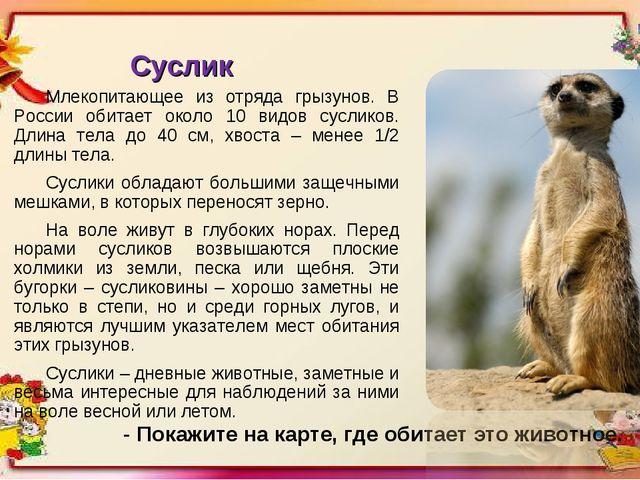 Суслик Млекопитающее из отряда грызунов. В России обитает около 10 видов сусл...