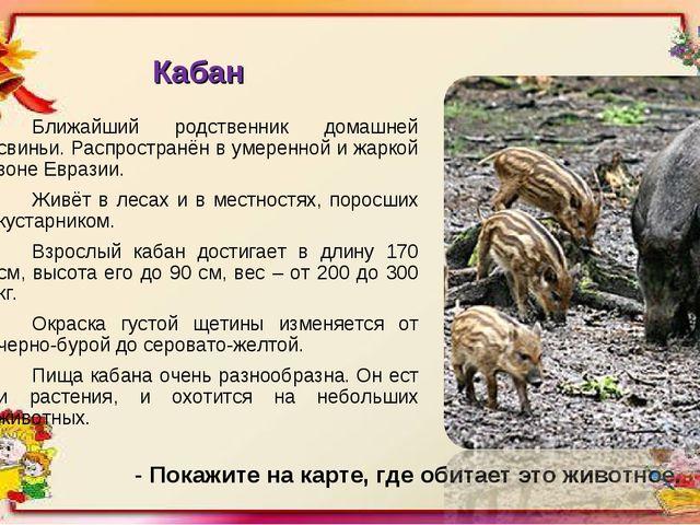 Кабан Ближайший родственник домашней свиньи. Распространён в умеренной и жарк...