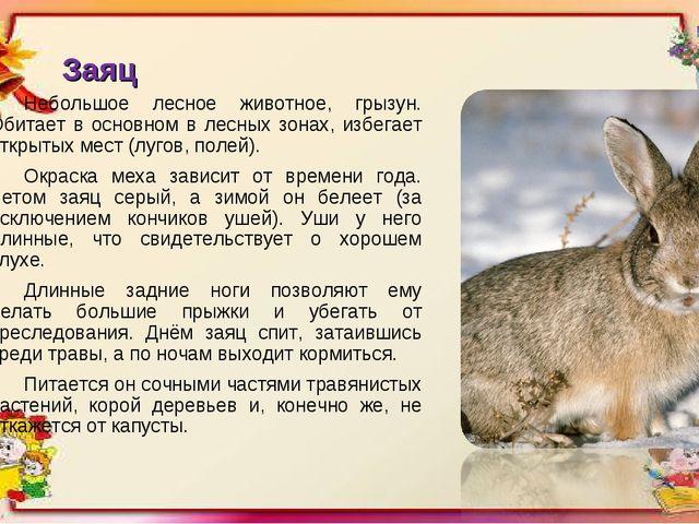 Заяц Небольшое лесное животное, грызун. Обитает в основном в лесных зонах, из...