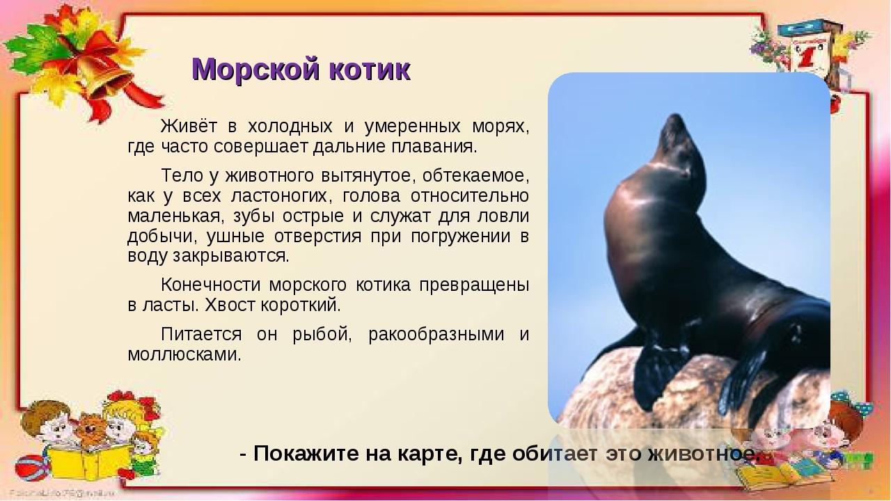 Морской котик Живёт в холодных и умеренных морях, где часто совершает дальние...