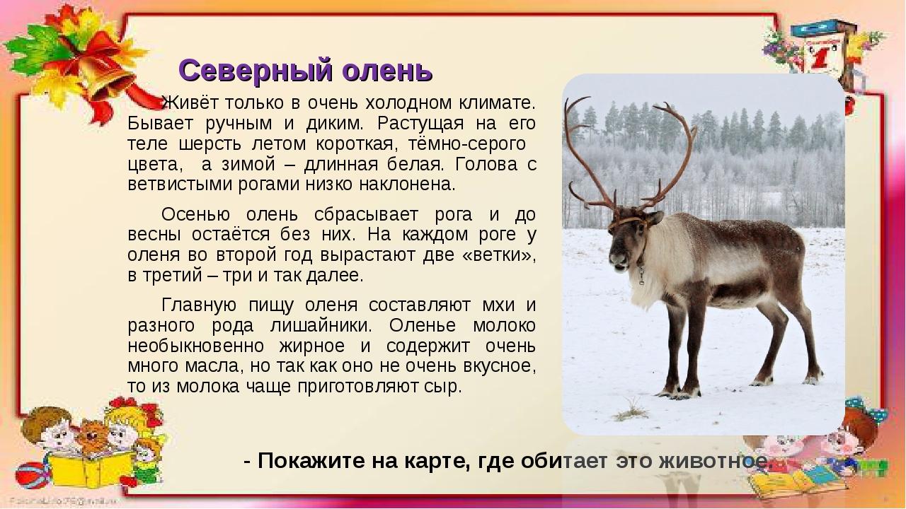 Северный олень Живёт только в очень холодном климате. Бывает ручным и диким....