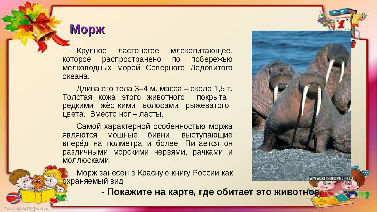 Морж Крупное ластоногое млекопитающее, которое распространено по побережью ме...