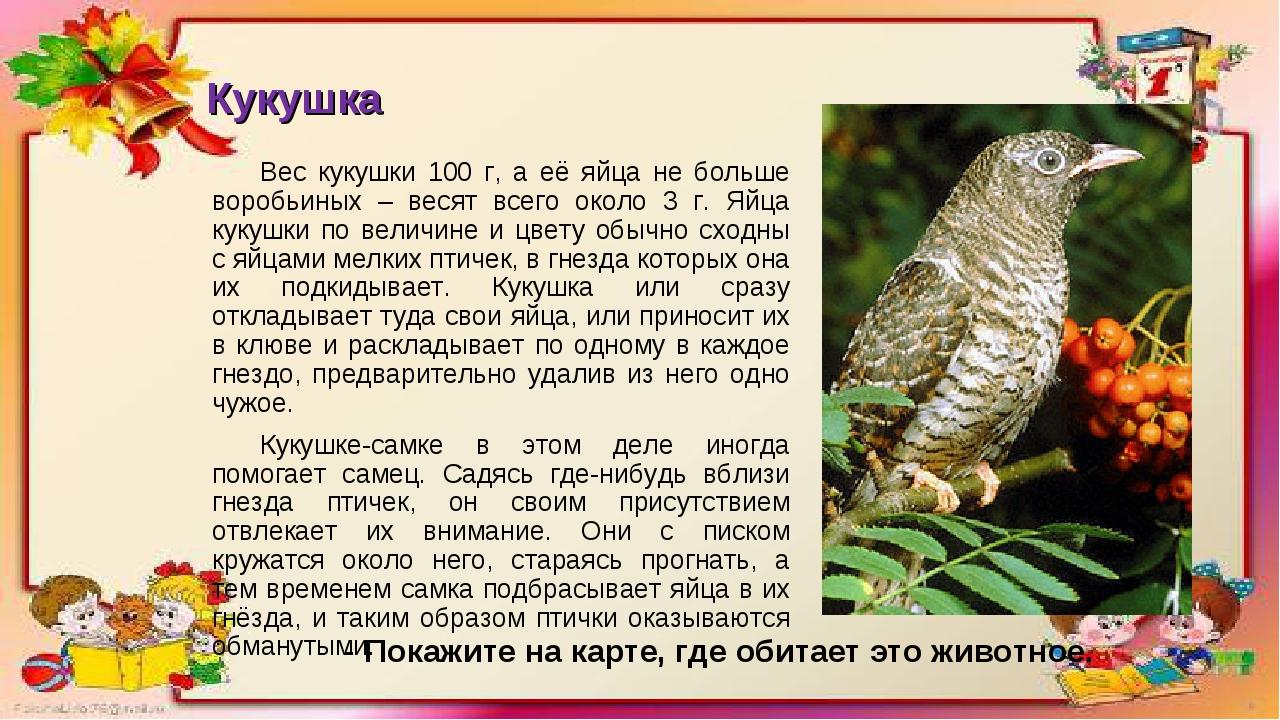Кукушка Вес кукушки 100 г, а её яйца не больше воробьиных – весят всего около...
