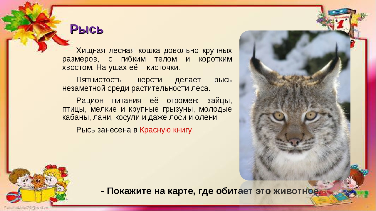 Рысь Хищная лесная кошка довольно крупных размеров, с гибким телом и коротким...