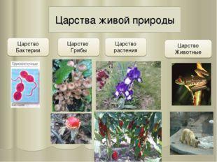Царства живой природы Царство Бактерии Царство Грибы Царство растения Царство