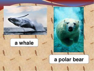 a whale a polar bear