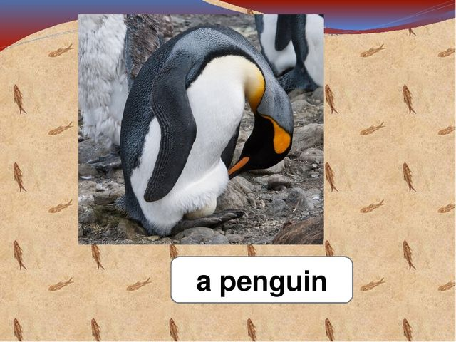 a penguin