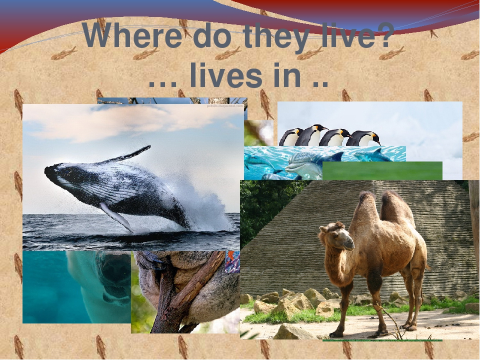 Where do they live? … lives in ..