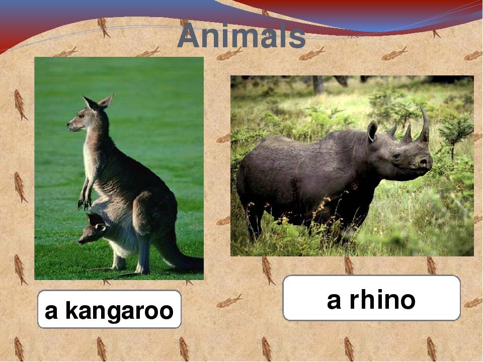 Animals a kangaroo a rhino