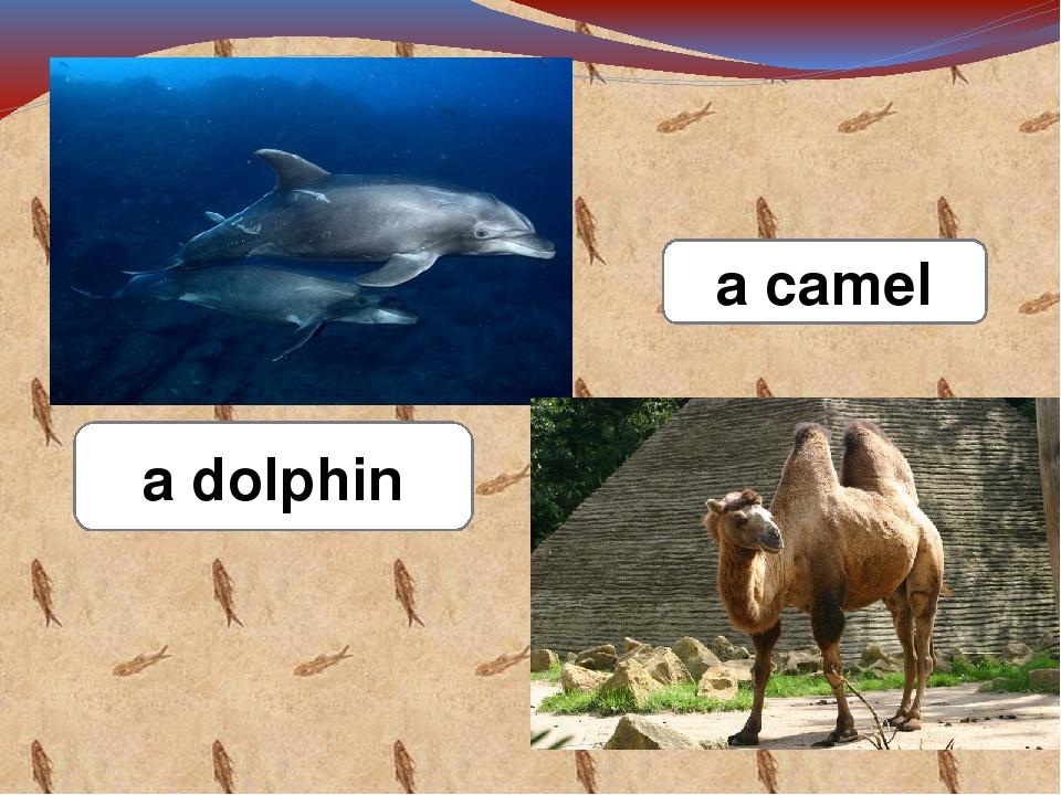 a dolphin a camel