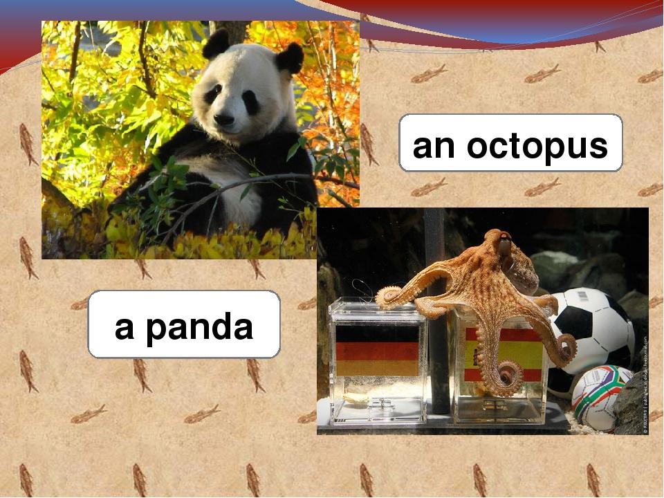 a panda an octopus