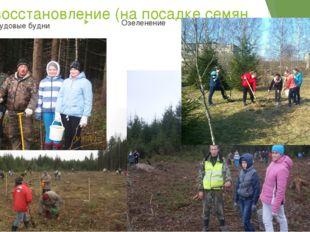 Лесовосстановление (на посадке семян дуба) Наши трудовые будни Озеленение