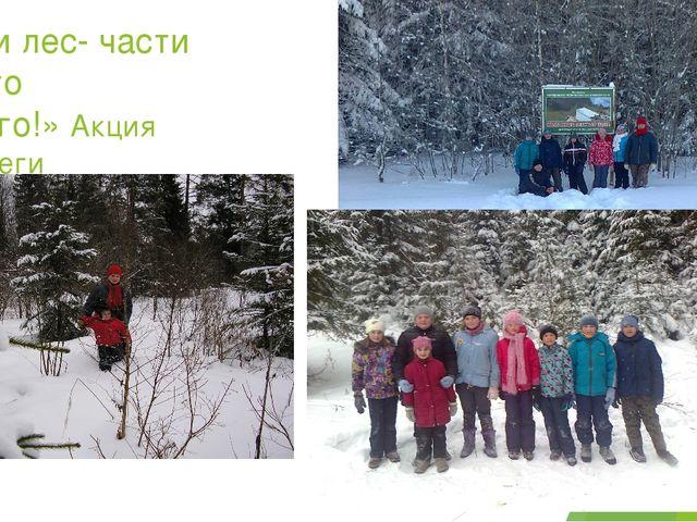 «Мы и лес- части одного целого!» Акция «Сбереги ель!» в предновогодние дни (д...