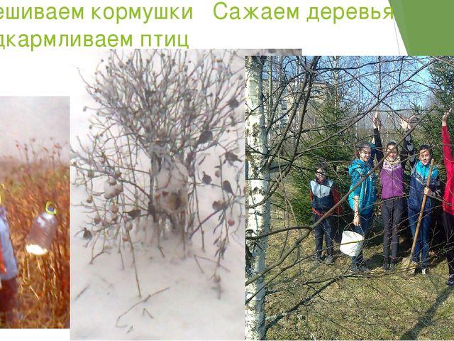 Развешиваем кормушки Сажаем деревья и подкармливаем птиц