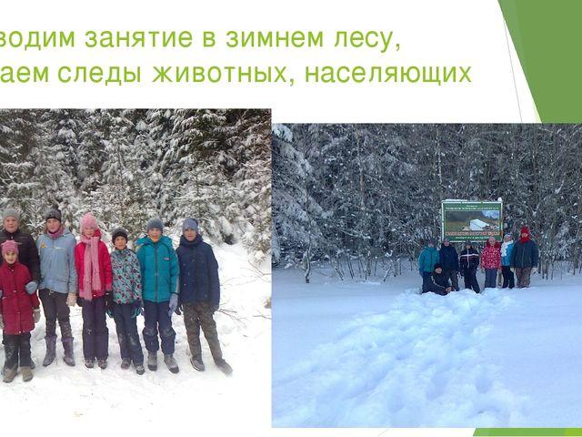 Проводим занятие в зимнем лесу, изучаем следы животных, населяющих лес.