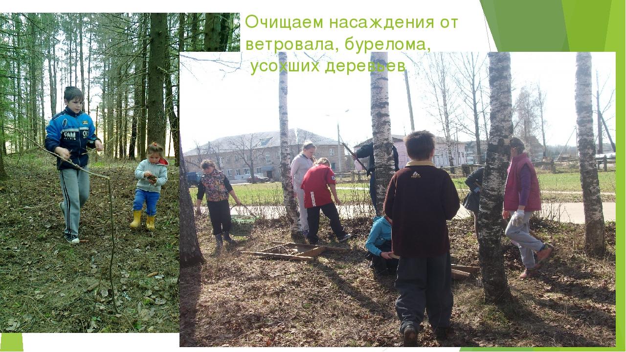 Очищаем насаждения от ветровала, бурелома, усохших деревьев