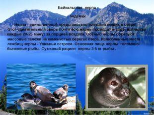 Байкальская нерпа эндемик Нерпа - единственный представитель млекопитающих в
