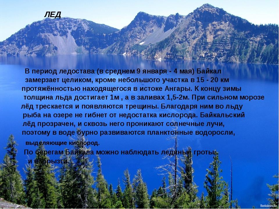 ЛЕД В период ледостава (в среднем 9 января - 4 мая) Байкал замерзает целиком,...