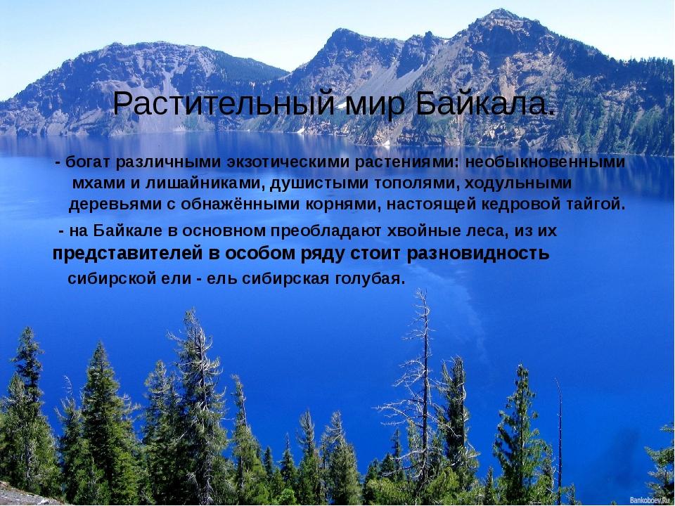 Растительный мир Байкала. - богат различными экзотическими растениями: необык...
