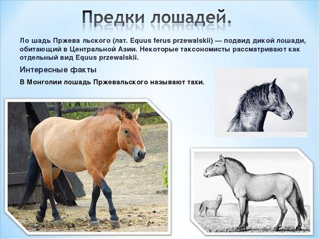 Ло́шадь Пржева́льского (лат. Equus ferus przewalskii) — подвид дикой лошади,...
