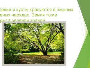 Деревья и кусты красуются в пышных зеленых нарядах. Земля тоже покрыта зелено