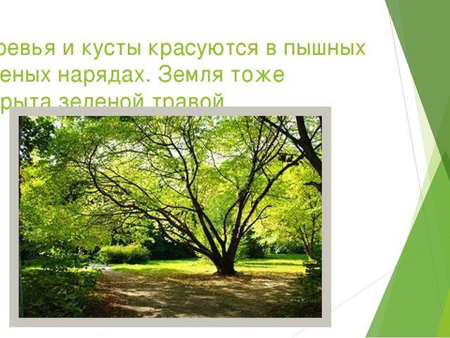 Деревья и кусты красуются в пышных зеленых нарядах. Земля тоже покрыта зелено...