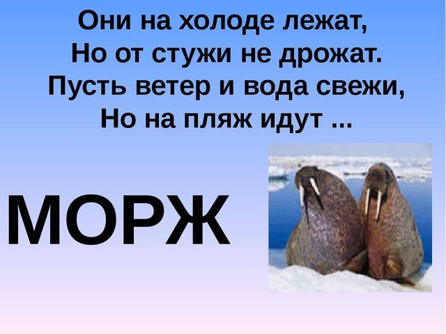 Они на холоде лежат, Но от стужи не дрожат. Пусть ветер и вода свежи, Но на п...