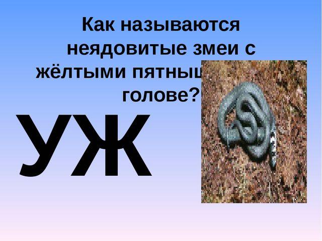 Как называются неядовитые змеи с жёлтыми пятнышками на голове? УЖ_ И