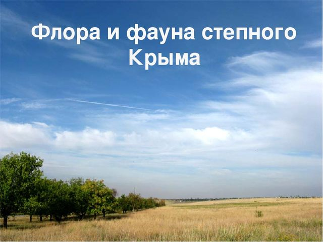 Флора и фауна степного Крыма