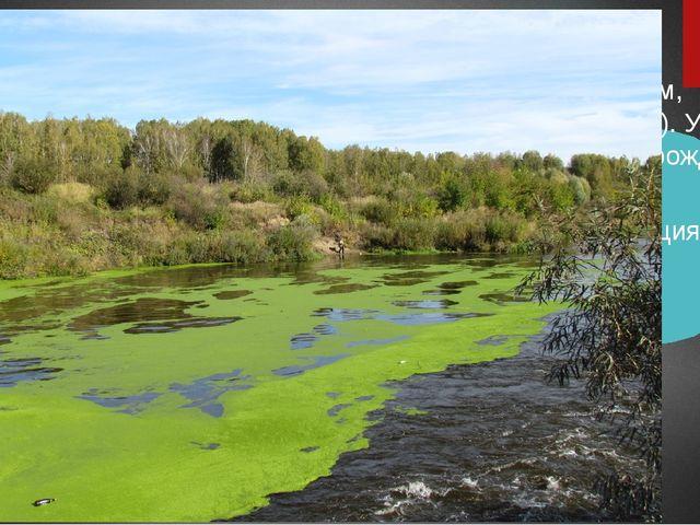 Загрязнение минеральными веществами: Соединениями металлов ( высокотоксичным...