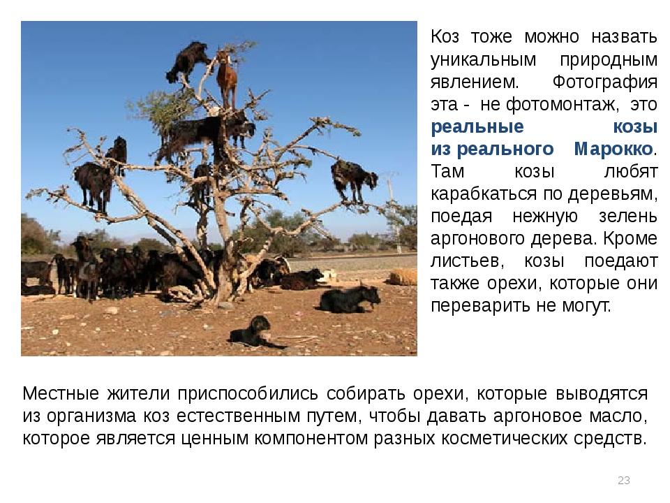 Коз тоже можно назвать уникальным природным явлением. Фотография эта- нефот...