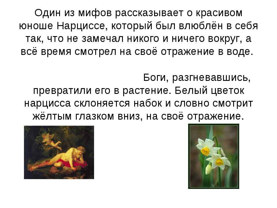 Один из мифов рассказывает о красивом юноше Нарциссе, который был влюблён в...