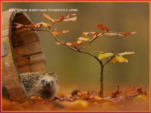 Как дикие животные готовятся к зиме. Осень – время подготовки для животных к
