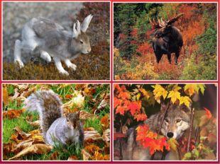 Меняется структура и цвет шерсти. Шерсть у животных становится густой и тёпло