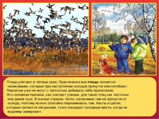 Птицы улетают в тёплые края. Практически все птицы питаются насекомыми, котор