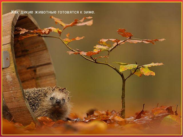Как дикие животные готовятся к зиме. Осень – время подготовки для животных к...