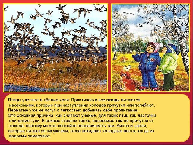 Птицы улетают в тёплые края. Практически все птицы питаются насекомыми, котор...