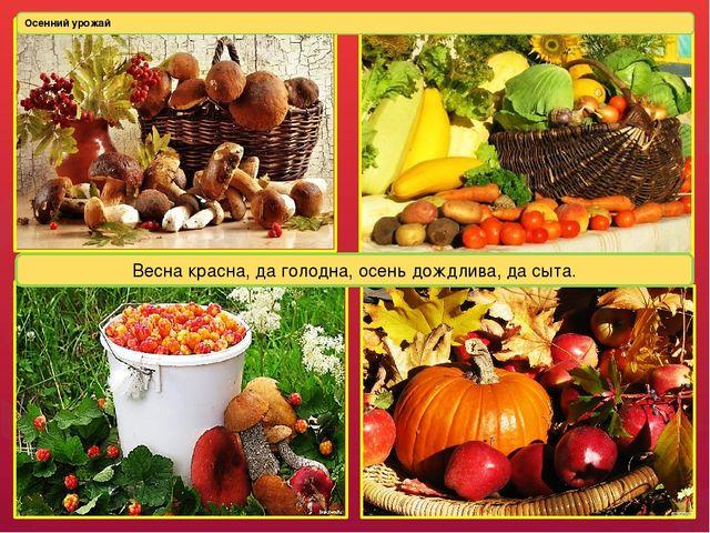 Осенний урожай Весна красна, да голодна, осень дождлива, да сыта. Люди собира...