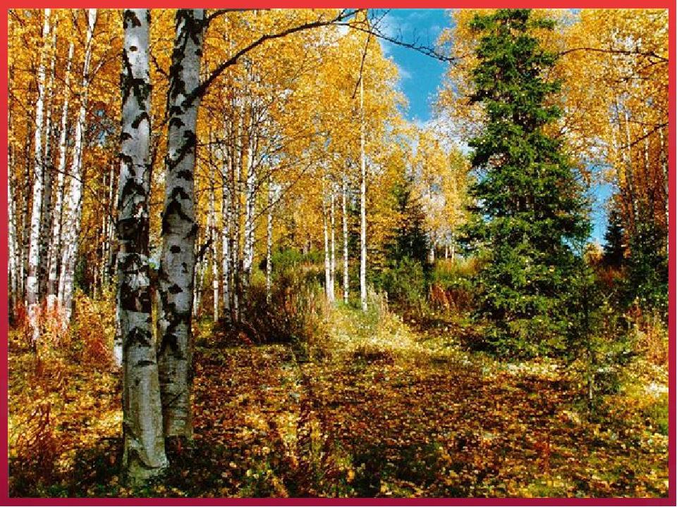 Что изображено на картинке?(деревья, кусты, трава). Как назвать одним словом?...