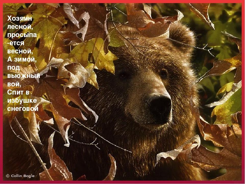 Хозяин лесной, просыпа -ется весной, А зимой, под вьюжный вой, Спит в избушке...