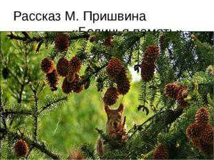 Рассказ М. Пришвина «Беличья память»