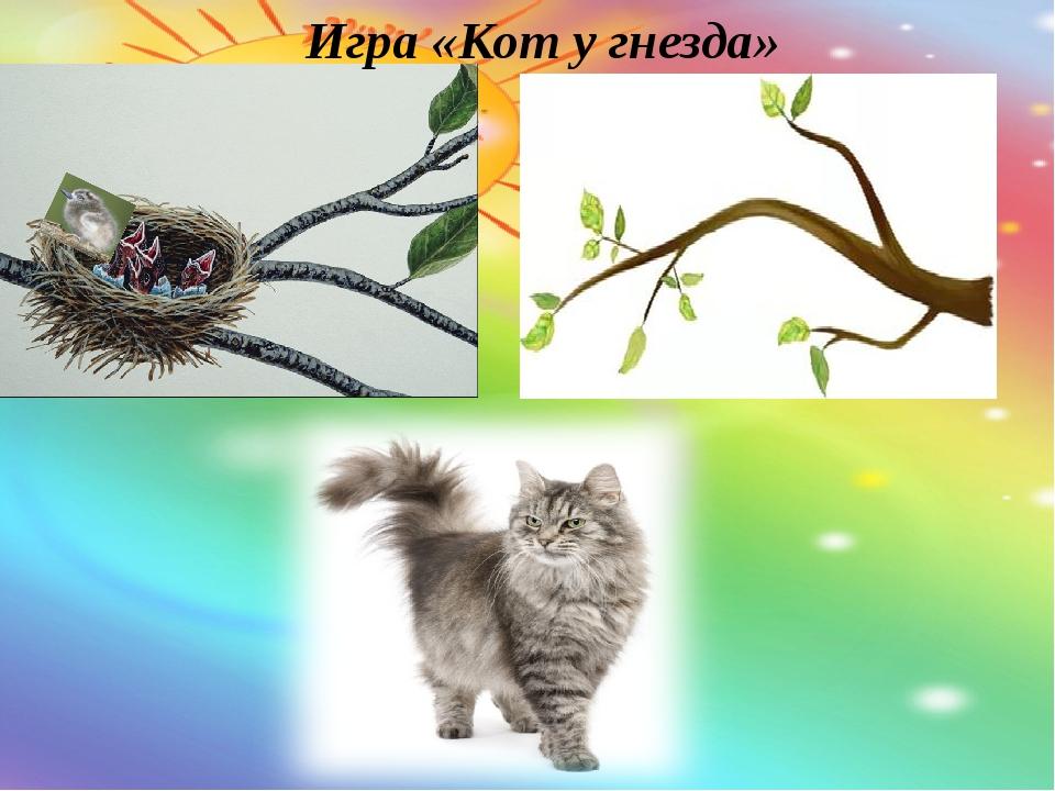 Игра «Кот у гнезда»
