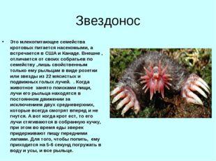Звездонос Это млекопитающее семейства кротовых питается насекомыми, а встреча