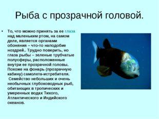 Рыба с прозрачной головой. То, что можно принять за ее глаза над маленьким рт
