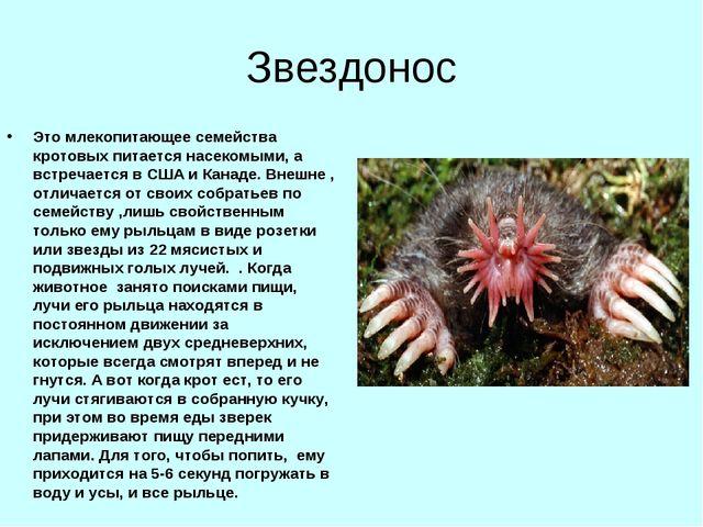Звездонос Это млекопитающее семейства кротовых питается насекомыми, а встреча...